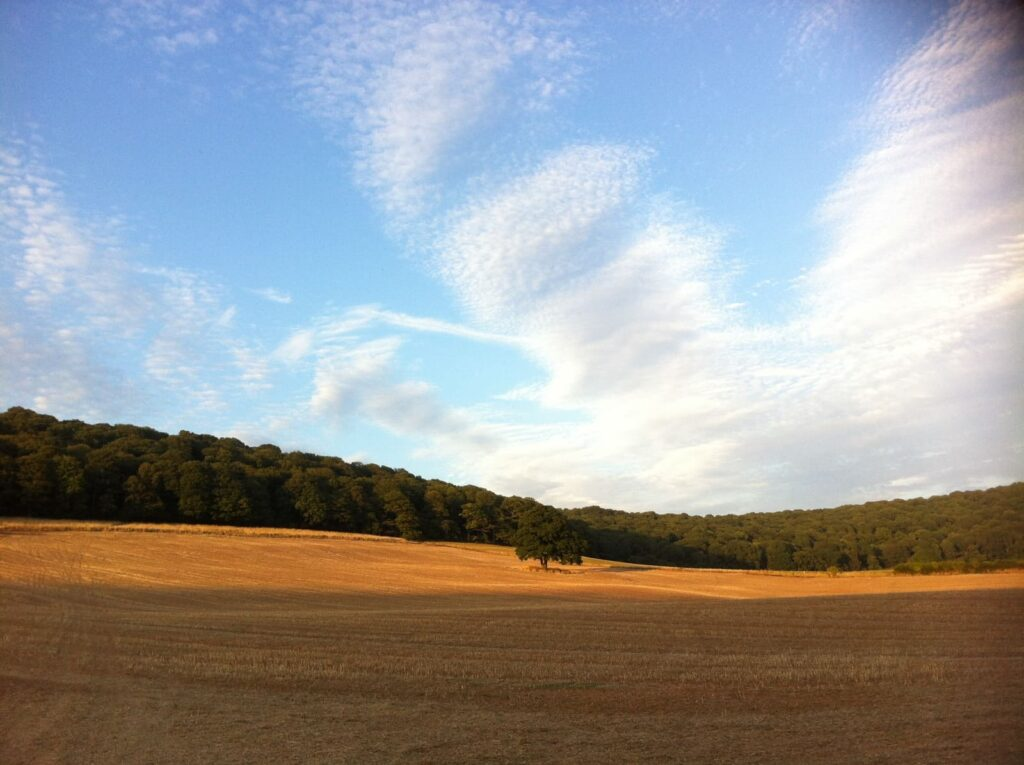 Clouds In A Blue Sky Over Golden Field
